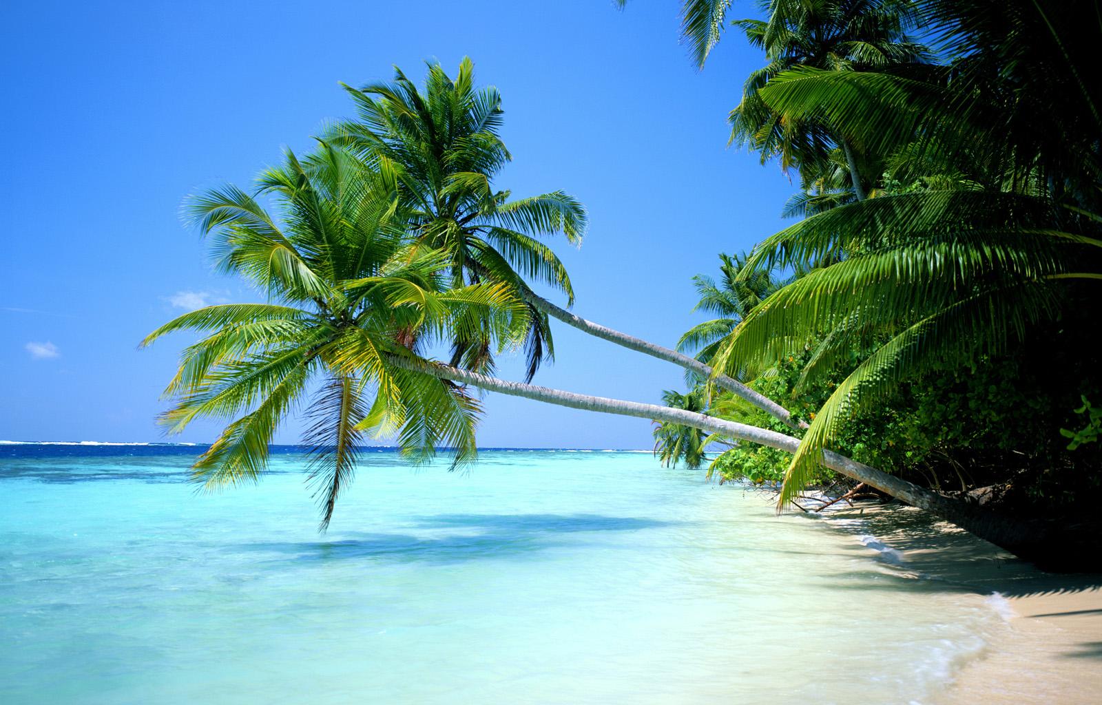 caraibi d'inverno